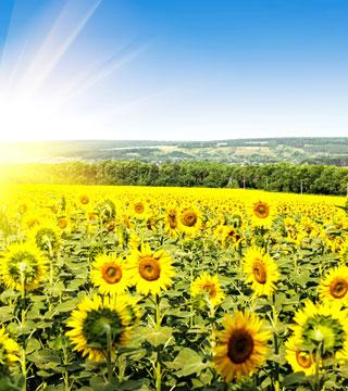 Réalisations panneau solaire à Soissons 3
